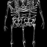 bones inverted